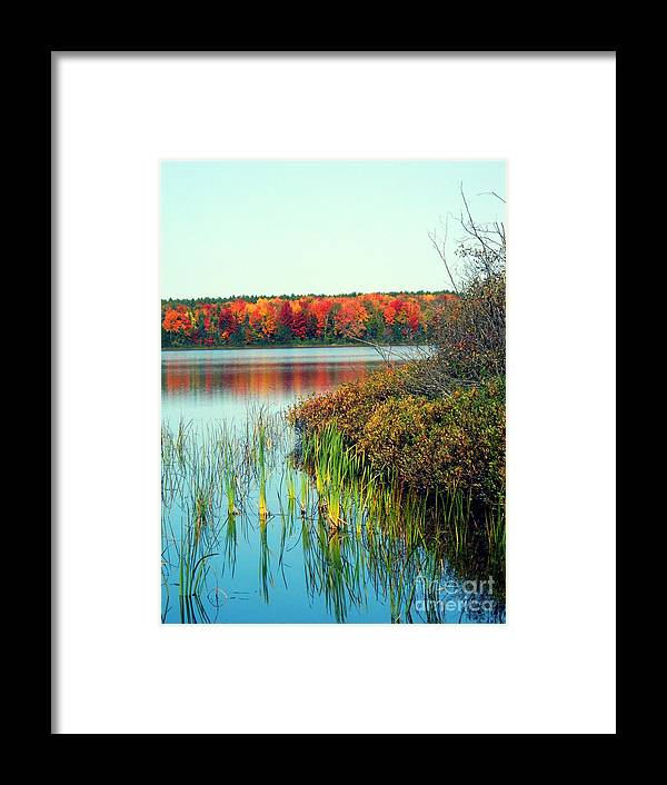 Pure Michigan Framed Print featuring the photograph Pond In The Woods In Autumn by Desiree Paquette