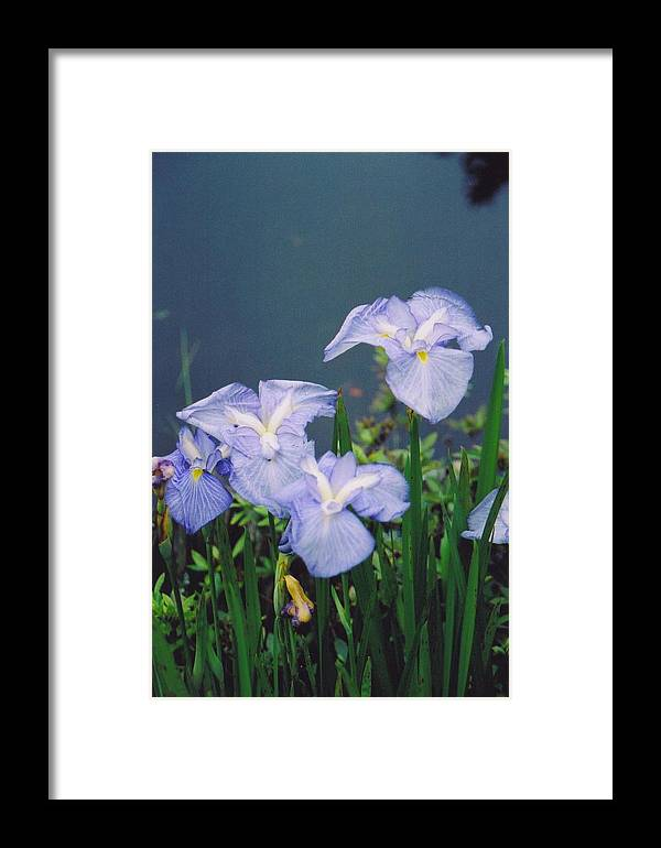 Flowers Framed Print featuring the photograph Pond Side Beauty by Hollie Cyr