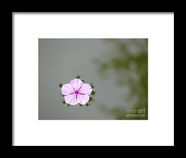 Float Framed Print featuring the photograph Ponder by Priscilla Richardson