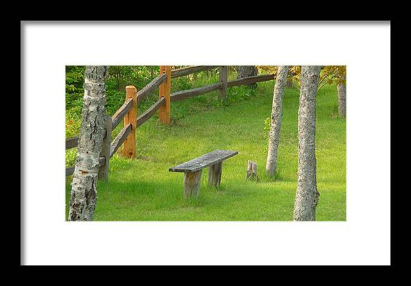 Trees Framed Print featuring the photograph Pondering Bench by Michael Carrothers