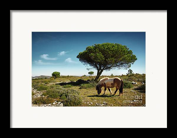 Animal Framed Print featuring the photograph Pony Pasturing by Carlos Caetano