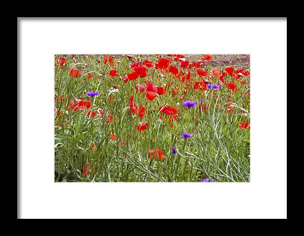 Plants And Flowers Framed Print featuring the photograph Poppies And Purple Flowers by Patrick Kessler