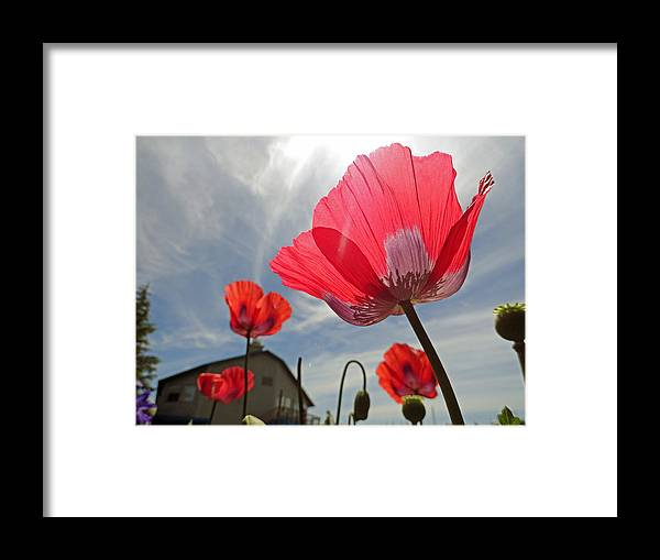 Poppies Framed Print featuring the photograph Poppies And Sky by Robert Meyers-Lussier