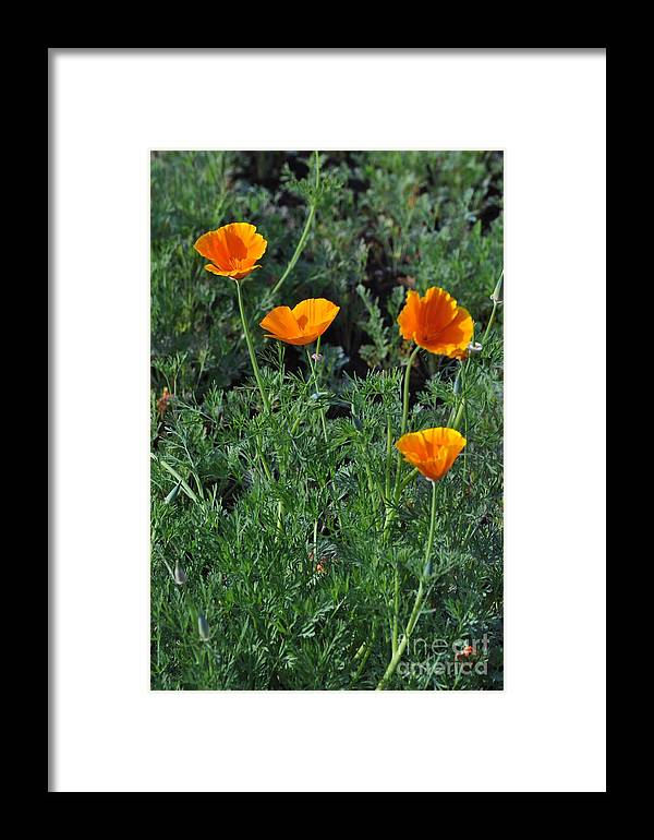 Poppy Framed Print featuring the photograph Poppy 957 by Karen McAfee