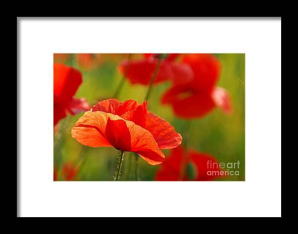 Poppy Love Framed Print featuring the photograph Poppy Love 2 by Andrea Kollo