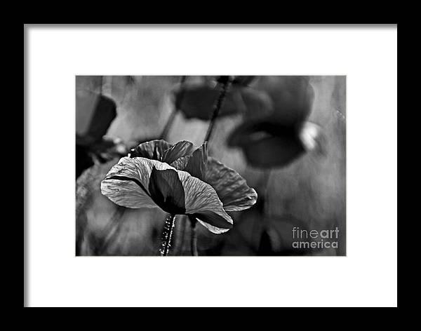 Poppy Love Framed Print featuring the photograph Poppy Love by Andrea Kollo