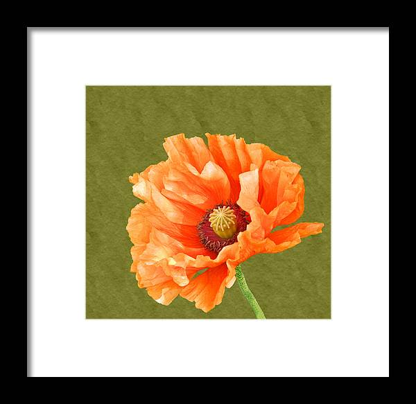 Poppies Framed Print featuring the photograph Poppy by Sharon Lisa Clarke