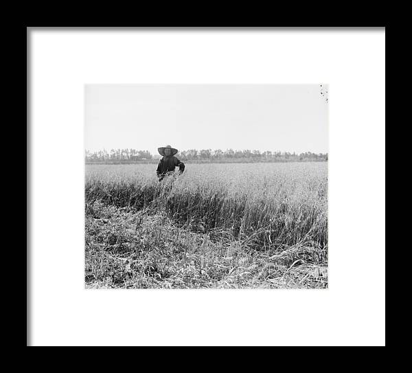 History Framed Print featuring the photograph Portrait Of A Jewish Settler In A Field by Everett