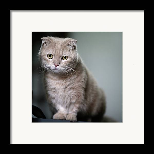 Square Framed Print featuring the photograph Portrait Of Cat by LeoCH Studio