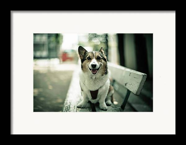 Horizontal Framed Print featuring the photograph Portrait Of Dog by Moaan