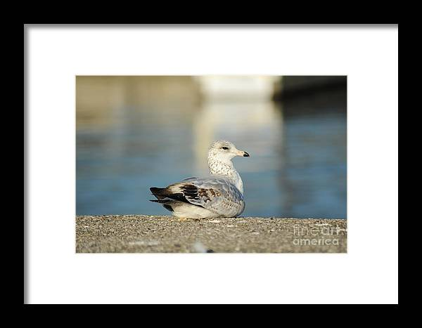 Pose Framed Print featuring the photograph Poser by Elaine Mikkelstrup