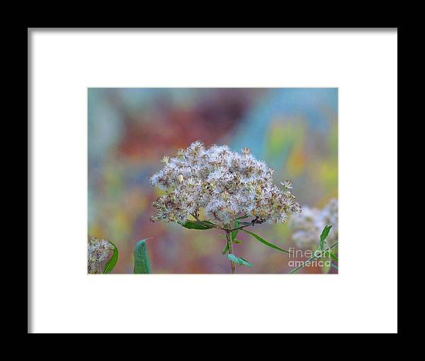Weed Framed Print featuring the photograph Pouffe by Rrrose Pix