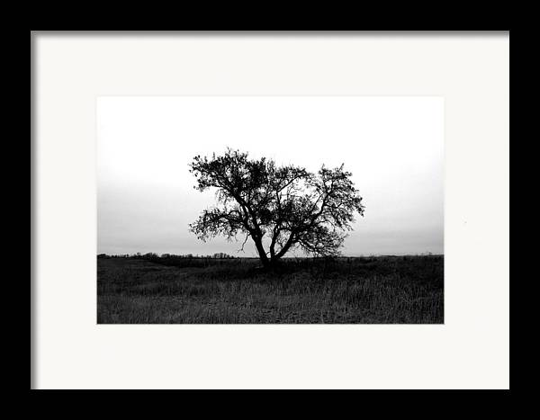 Elm Framed Print featuring the photograph Prairie Dog by The Artist Project
