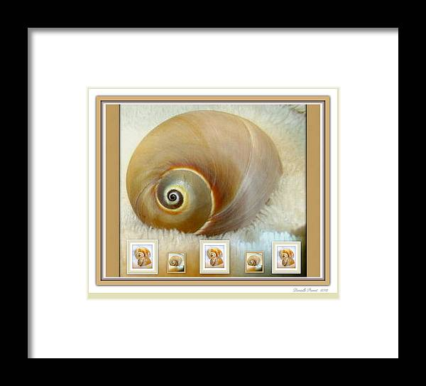 Praline And Cream Color Theme Modern Art Shell Print Framed Print featuring the photograph Praline And Cream by Danielle Parent