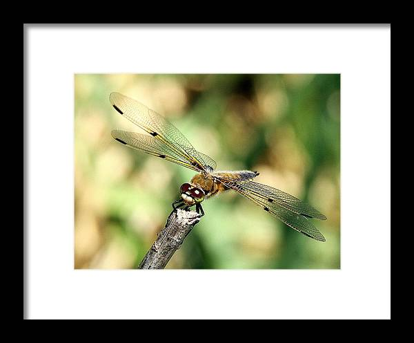 Fly Framed Print featuring the photograph Precarious Perch by Don Downer