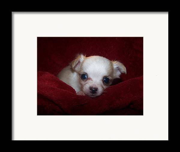 Digital Photography Framed Print featuring the photograph Precious by Christy Leigh