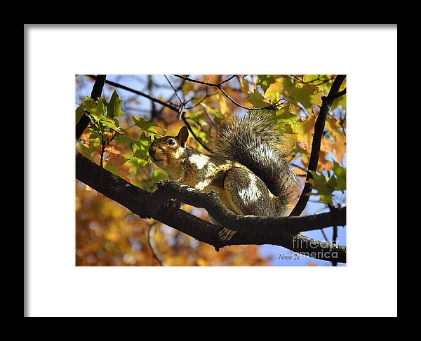 Nava Jo Thompson Framed Print featuring the photograph Preparing For Winter by Nava Thompson