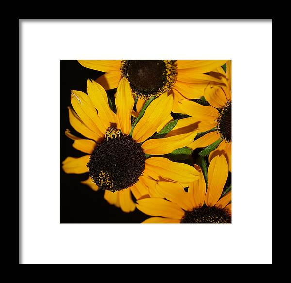 Black Eyed Susans Framed Print featuring the photograph Pretend I'm A Flower by Irma BACKELANT GALLERIES