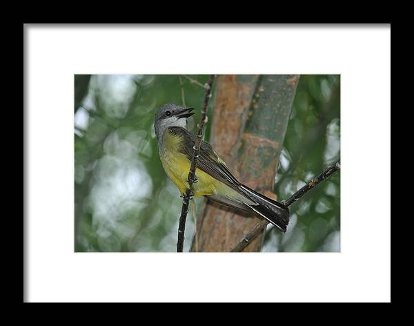 Bird Framed Print featuring the photograph Pretty Bird by Vickie Treadway