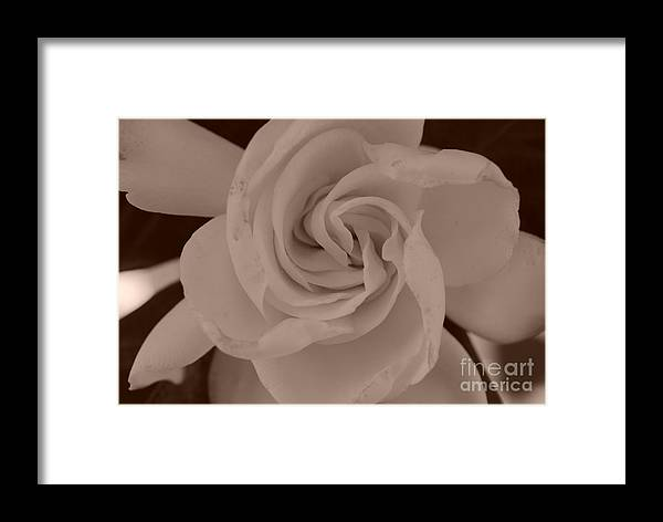 Sepia Framed Print featuring the photograph Pretty Flower Sepia by Samantha Black
