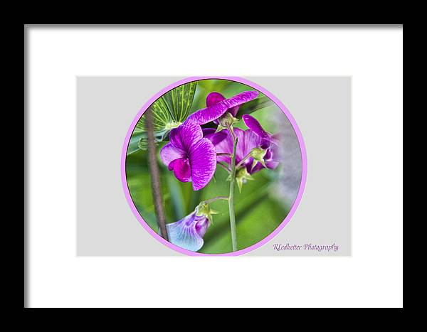 Greeting Cards Framed Print featuring the photograph Pretty In Pink by Renee Ledbetter