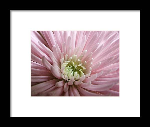 Flower Framed Print featuring the photograph Pretty In Pink by Tanya Jacobson-Smith