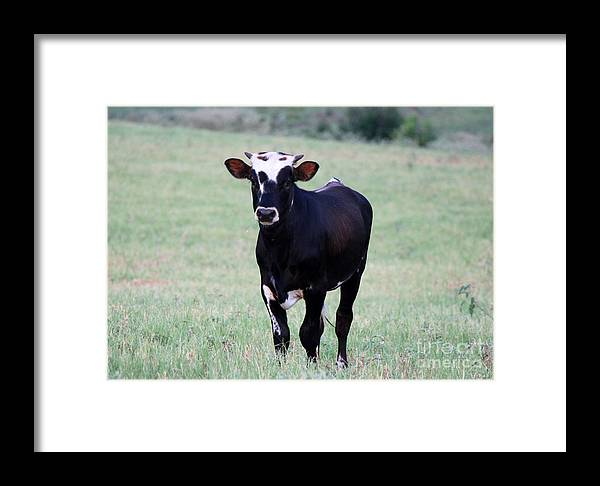 Young Calf Framed Print featuring the photograph Pretty Young Thing by Kathy White