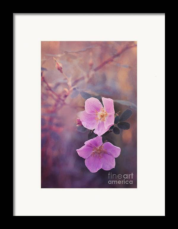 Rosa Acicularis Framed Print featuring the photograph Prickly Rose by Priska Wettstein