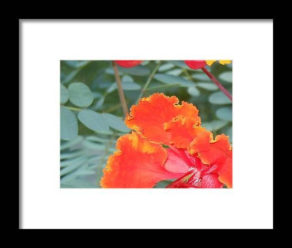 Sun Loving Plants Framed Print featuring the photograph Pride On Fire by Lynn Maverick Denzer