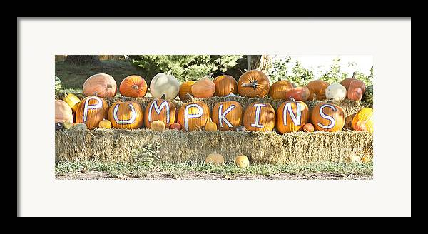 Pumpkins Framed Print featuring the photograph Pumpkins P U M P K I N S by James BO Insogna