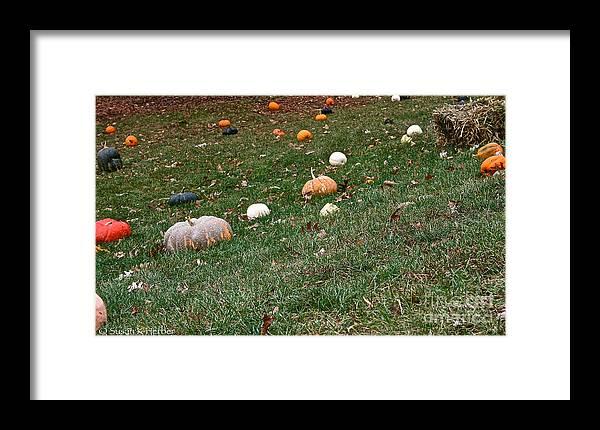 Outdoors Framed Print featuring the photograph Pumpkins by Susan Herber