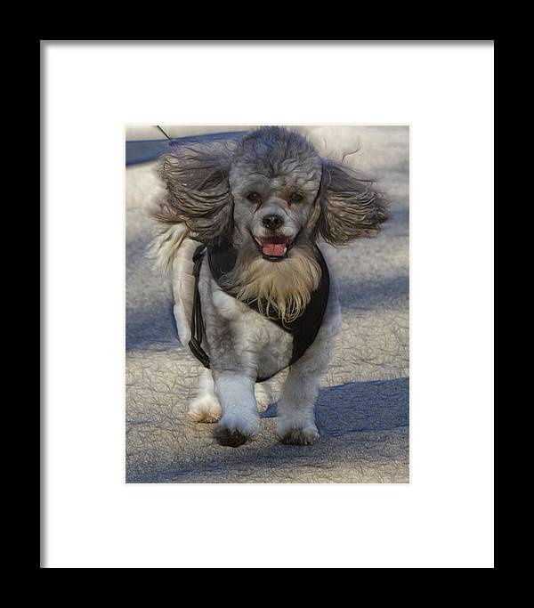 Lil Bear Framed Print featuring the photograph Puppy Walk by Linda Tiepelman