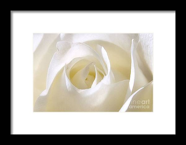 Flower Framed Print featuring the photograph Pure Glow by Susan Smith