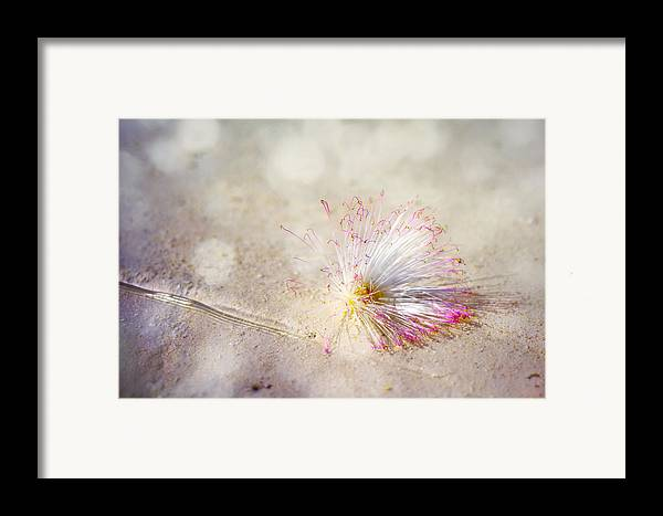 Flower Framed Print featuring the photograph Purity by Jenny Rainbow