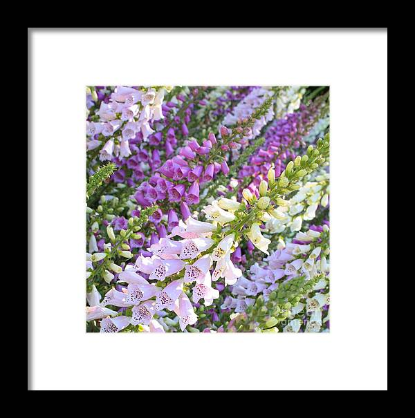 Purple Framed Print featuring the photograph Purple And White Foxglove Square by Carol Groenen