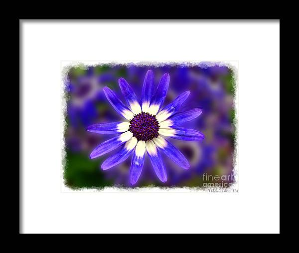 Nature Framed Print featuring the digital art Purple Daisy Photoart by Debbie Portwood