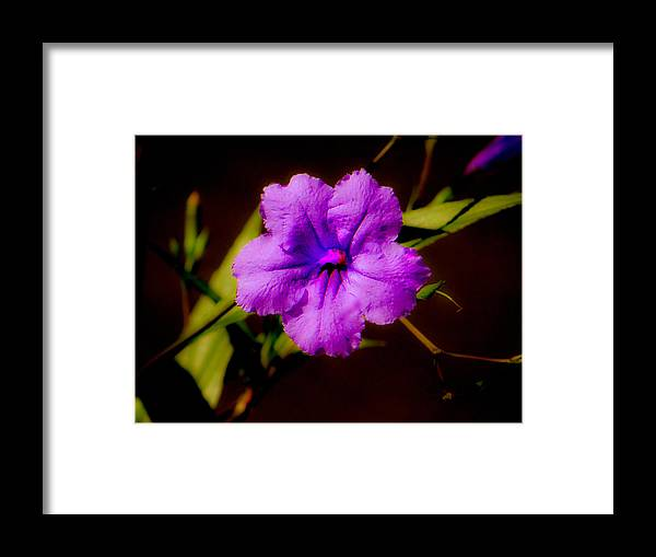 Flower Framed Print featuring the photograph Purple Is The Color by Dennis Dugan