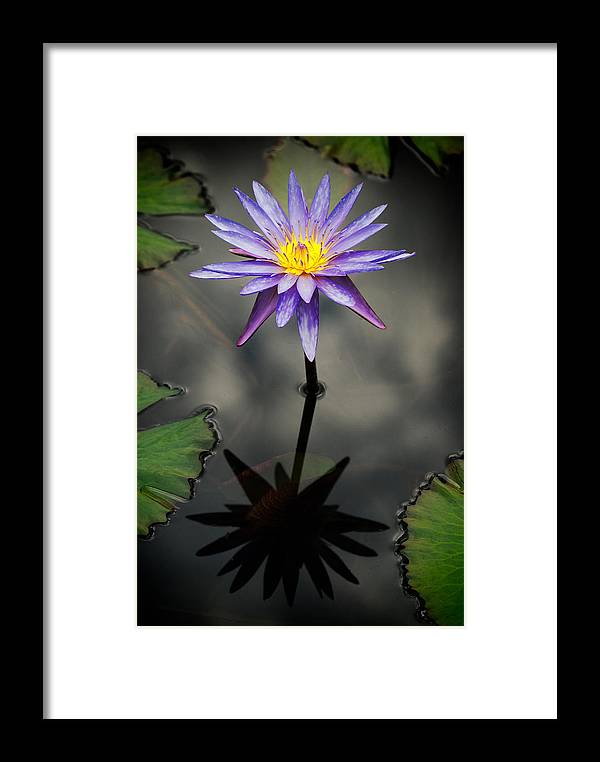 Flower Framed Print featuring the photograph Purple Lotus by Antonio Rosario