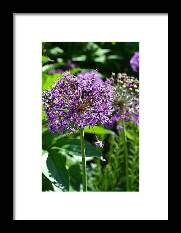 Nature Framed Print featuring the photograph Purple Majesty by Tiffany Ball-Zerges