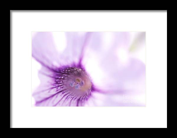 Purple Framed Print featuring the photograph Purple Marco Flower by Sean Stauffer