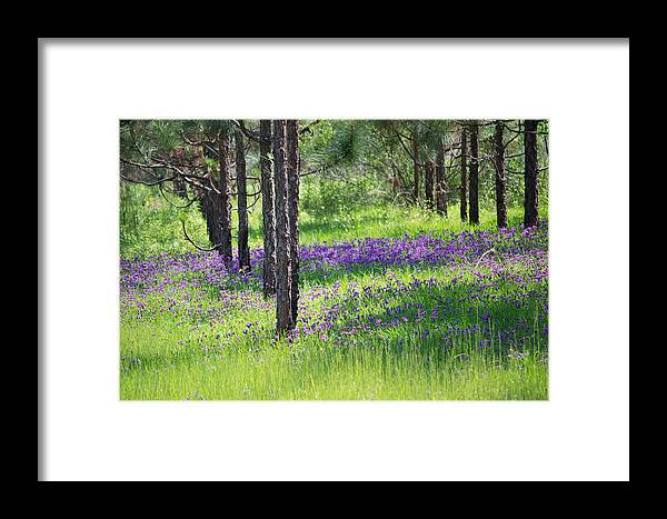 Landscape Framed Print featuring the photograph Purple Meadow by Michael Cole