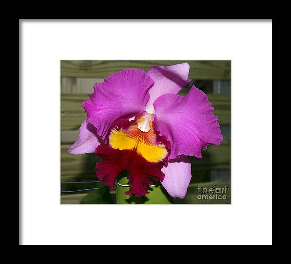 Flower Framed Print featuring the digital art Purple Orchid by Maxine Bochnia