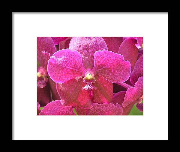 Violet Framed Print featuring the painting Purple Orchid by Rima Geleziunas