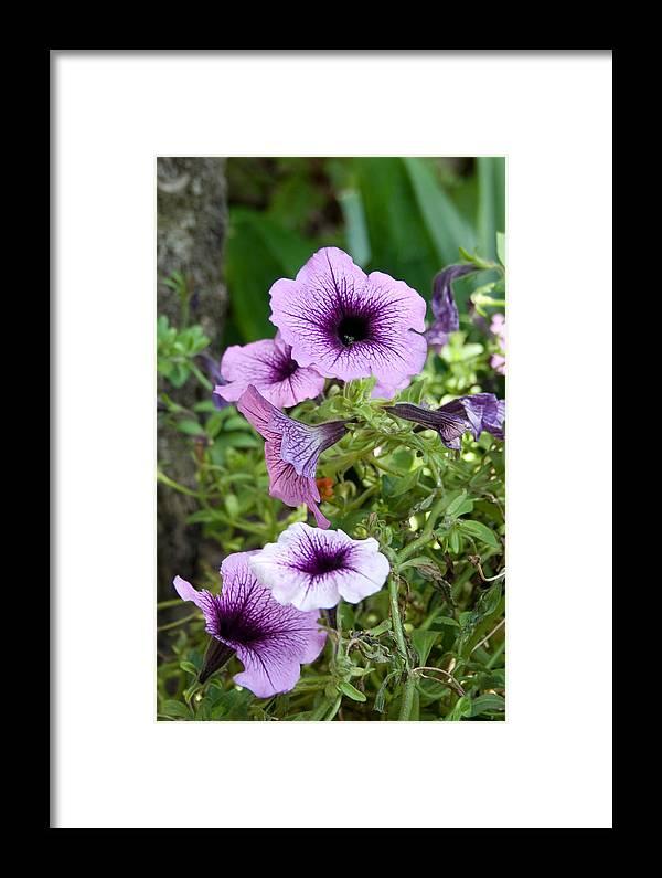 Flower Framed Print featuring the photograph Purple Petunias by Karen Harrison