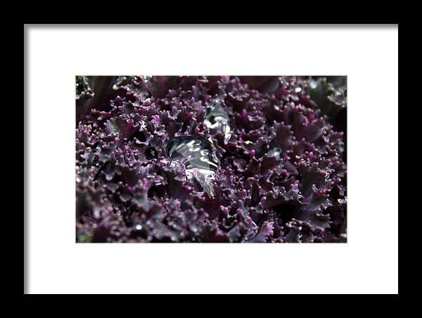 Rain Framed Print featuring the photograph Purple Rain by Annie Babineau