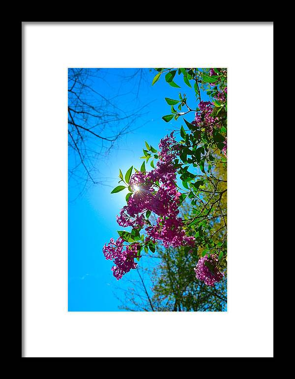 Flowers Framed Print featuring the photograph Purple Welcome by Dawn Santos