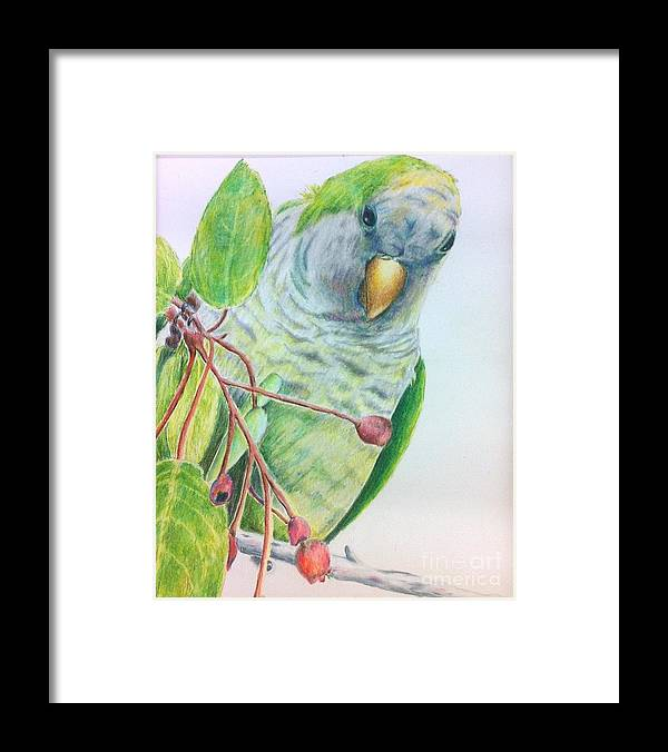 Nature Framed Print featuring the painting Quaker by Norma Gafford