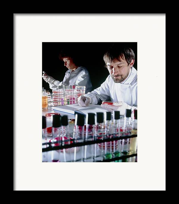 Microbiology Laboratory Framed Print featuring the photograph Quality Control On Media To Grow Microorganisms by Geoff Tompkinson