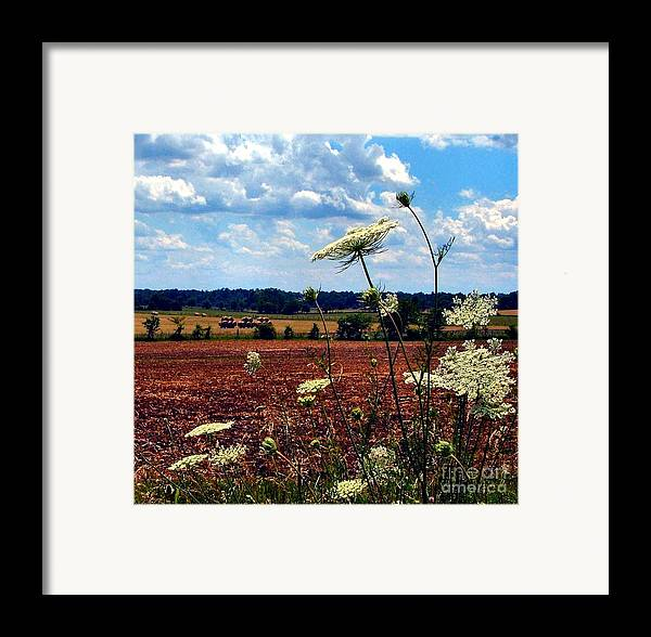 Queen Annes Lace Framed Print featuring the photograph Queen Annes Lace And Hay Bales by Julie Dant