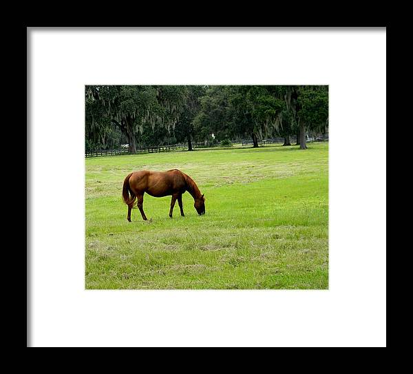 Quiet Summer Afternoon Framed Print featuring the photograph Quiet Summer Afternoon by Warren Thompson